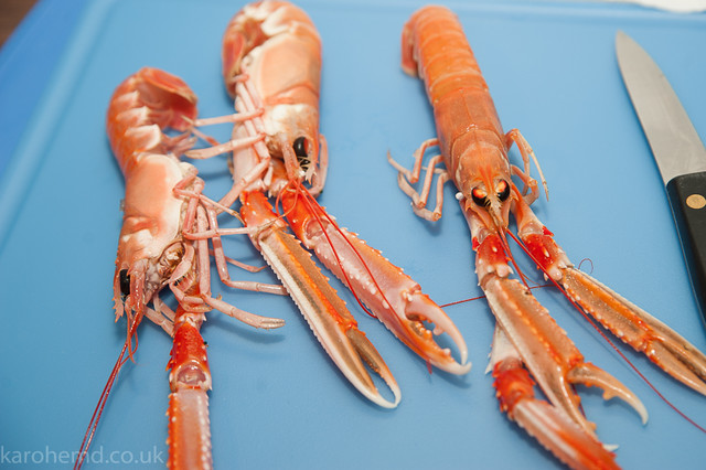Fresh langoustines, ready to be cooked