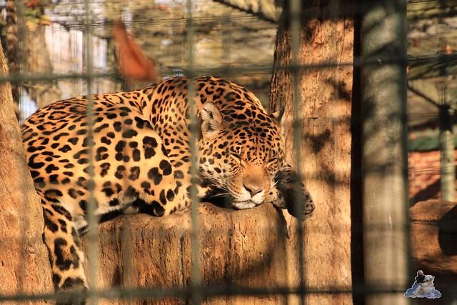 Zoo Berlin 08.11.2015  0103
