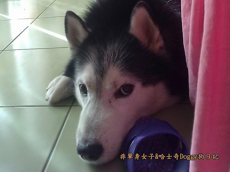 Doggy穿兒童襪03