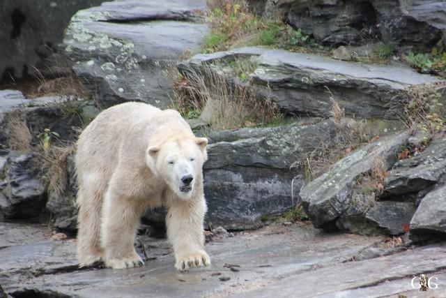 Schneetreiben Tierpark Friedrichsfelde 22.11.152