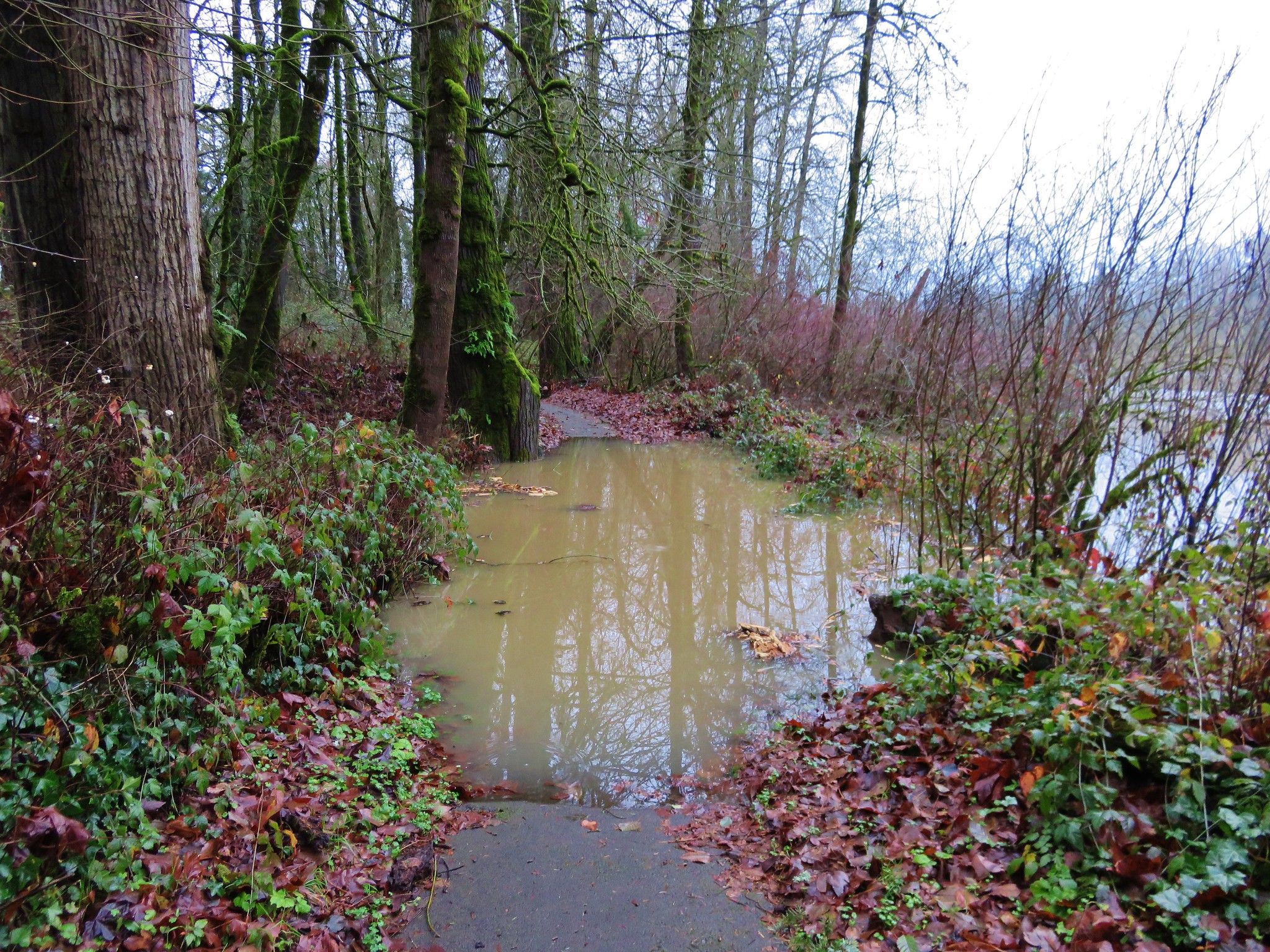 Flooded trail in Champoeg State Park