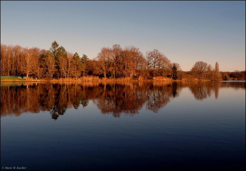 Les arbres du lac  23864741886_5286d843b1_b