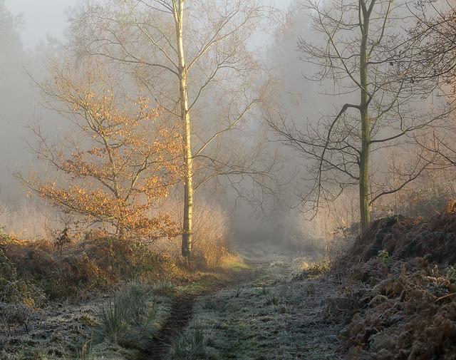 Light on a Foggy Day