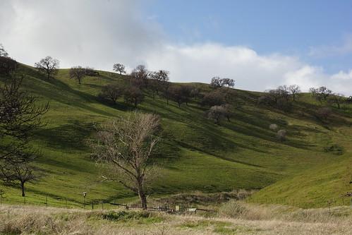 2017-01-19 Contra Loma Regional Park - Take 3 [#3]