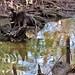 02-06-17 Friend's Visit 13 por derek.kolb