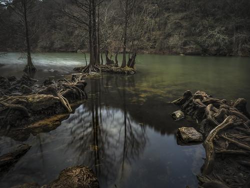 redbudisle austin texas ladybirdlake cypress swamp creek stream river landscape olympus
