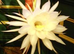 moonlight cactus(0.0), plant(0.0), epiphyllum anguliger(0.0), cactus family(0.0), caryophyllales(0.0), flower(1.0), yellow(1.0), flora(1.0), epiphyllum oxypetalum(1.0), epiphyllum crenatum(1.0), petal(1.0),