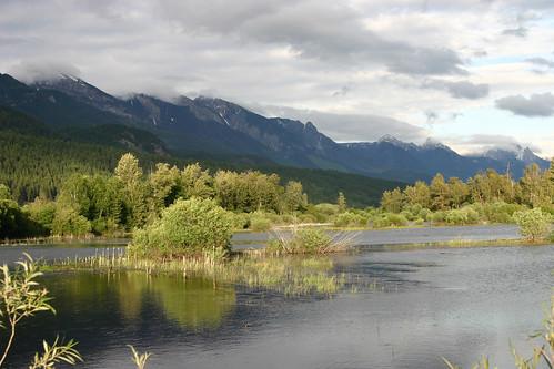 canada nature river riverside britishcolumbia columbiariver wetlands