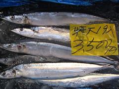 mackerel(0.0), trout(0.0), cod(0.0), forage fish(0.0), bonito(0.0), oily fish(0.0), barramundi(0.0), sardine(0.0), animal(1.0), fish(1.0), fish(1.0), marine biology(1.0), milkfish(1.0),