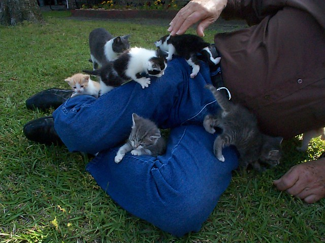 So many kittens!