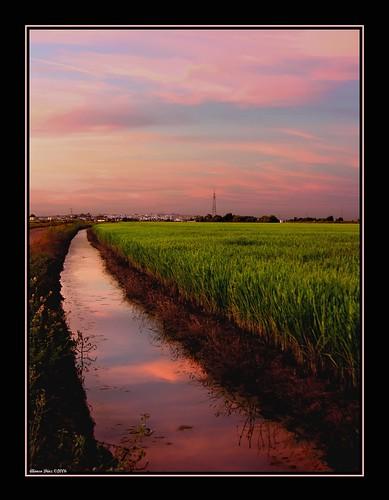 sunset atardecer sevilla andalucía nikon topf75 quality 500v50f ricefields alonso alonsodr lapuebladelrío arrozales haltenhof abigfave