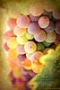 Temecula Valley Wine Country 8.15.15 10 by Marcie Gonzalez