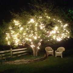 Summer tree lights...