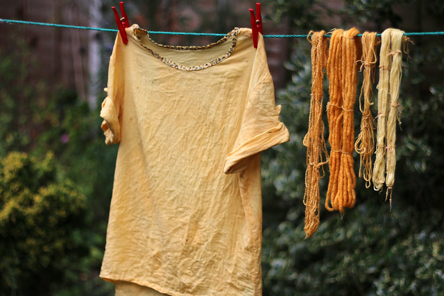 Natural Dyeing with Bidens