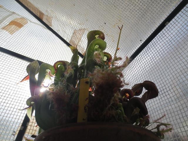 Plantas.werds.2012-2013 - Página 8 21285120211_a883558658_z