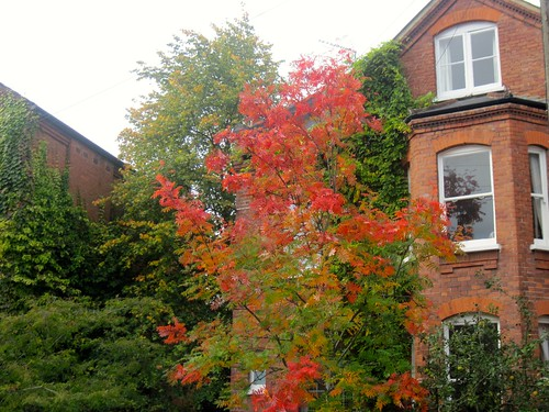 Autumn in Highgate