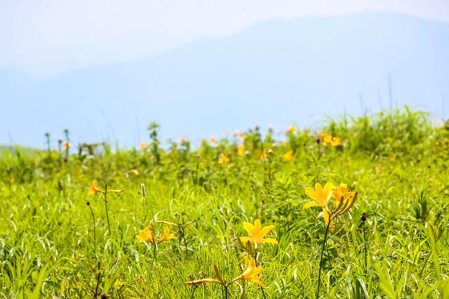 2014-07-26_00204_霧ヶ峰.jpg