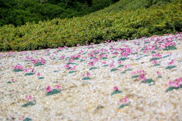 2014-08-02_00584_燕岳.jpg