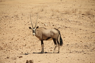 Oryx, Fish Canyon