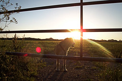 WauWau Hunde dogs