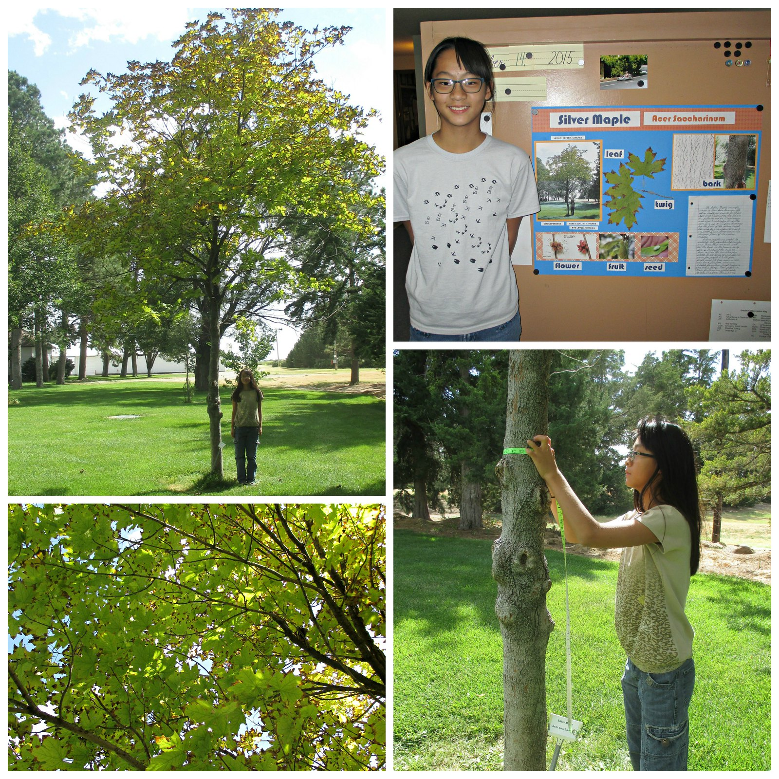Karas Tree Collage
