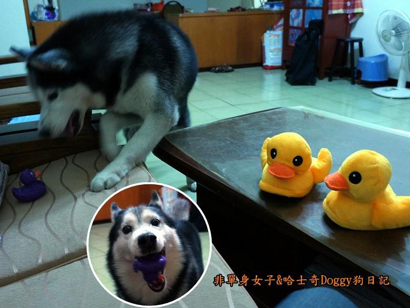 doggy黃色小鴨鞋05