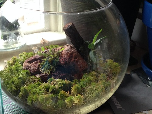Glass globe terrarium update