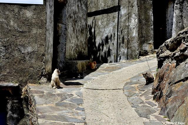 Cuatro gatos.