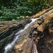 Waterfall in a dead tree