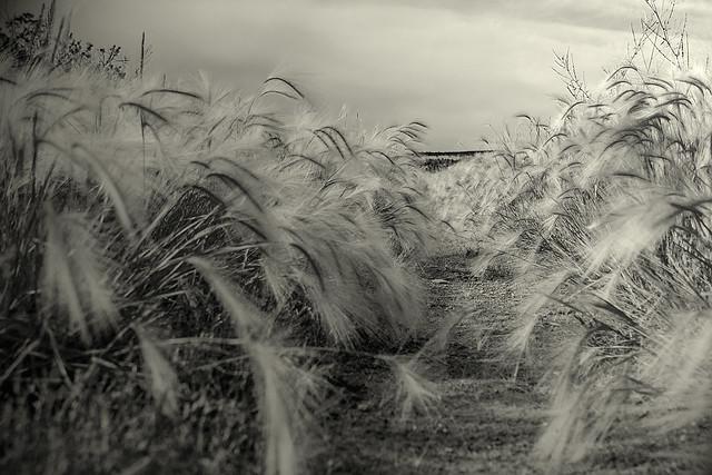 B&W Weeds 20d_2526