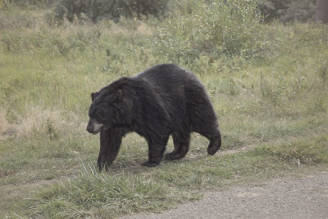 Bear World Bear - Impressions - Soft Sketch 40 pct