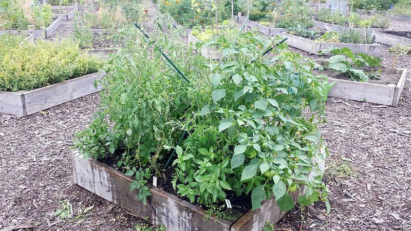 Tomato plot