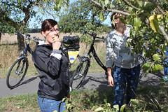 Radfahrerinnen machen eine Pause am Birnenbaum am Oderbruchbahn-Radweg, Foto Steffen Lelewel