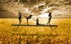 Wheat-field-at-the-sunset by gavinkenyon564