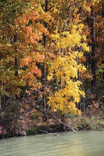 IMG_6496_Fall_Foliage
