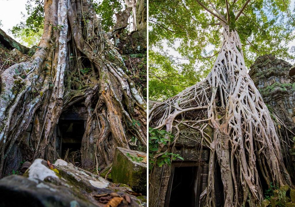 Angkor - Ta Prohm5