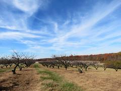 unproductive orchard