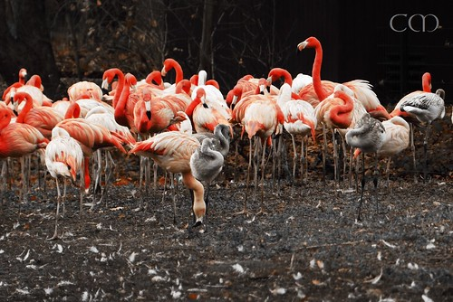 Flamingos in one-color-modus.. :)