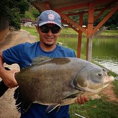 Tiago Sampaio com um tamba de 26 kg fisgado com isca anteninha do japa no pesqueiro Recanto das Lagoas em Guarulhos-SP  #pescaamadora #pesqueesolte #baitcast #fly #pescaesportiva #sportfishing #fishing #flyfishing #fish #bassfishing #bass #angler #anglera