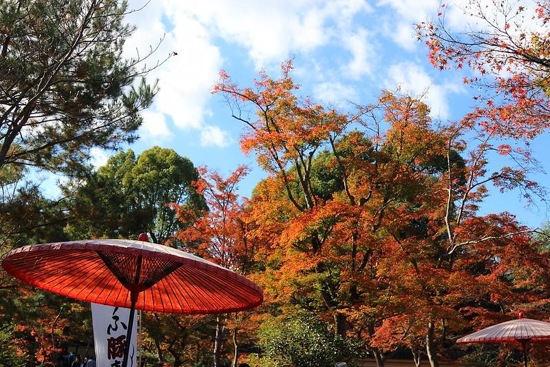 京和傘と紅葉