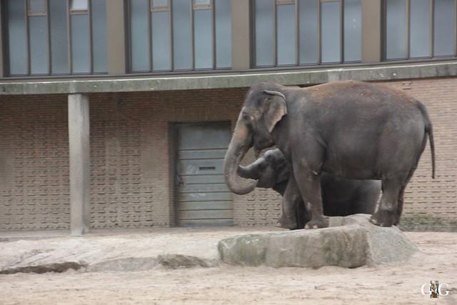 Besuch im Berliner Zoo 06.12.2015102