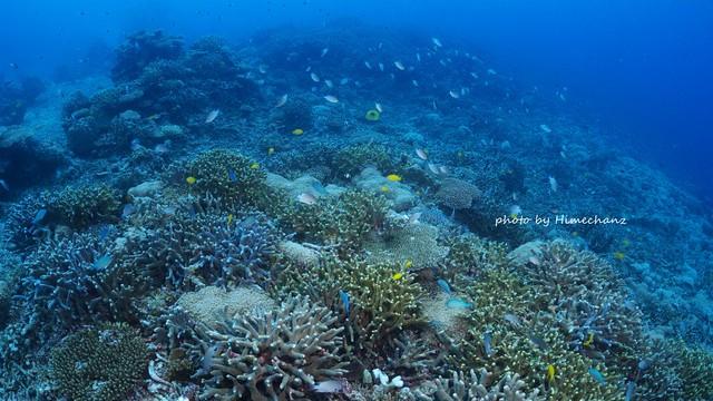 サンゴにいっぱい癒やされました♪