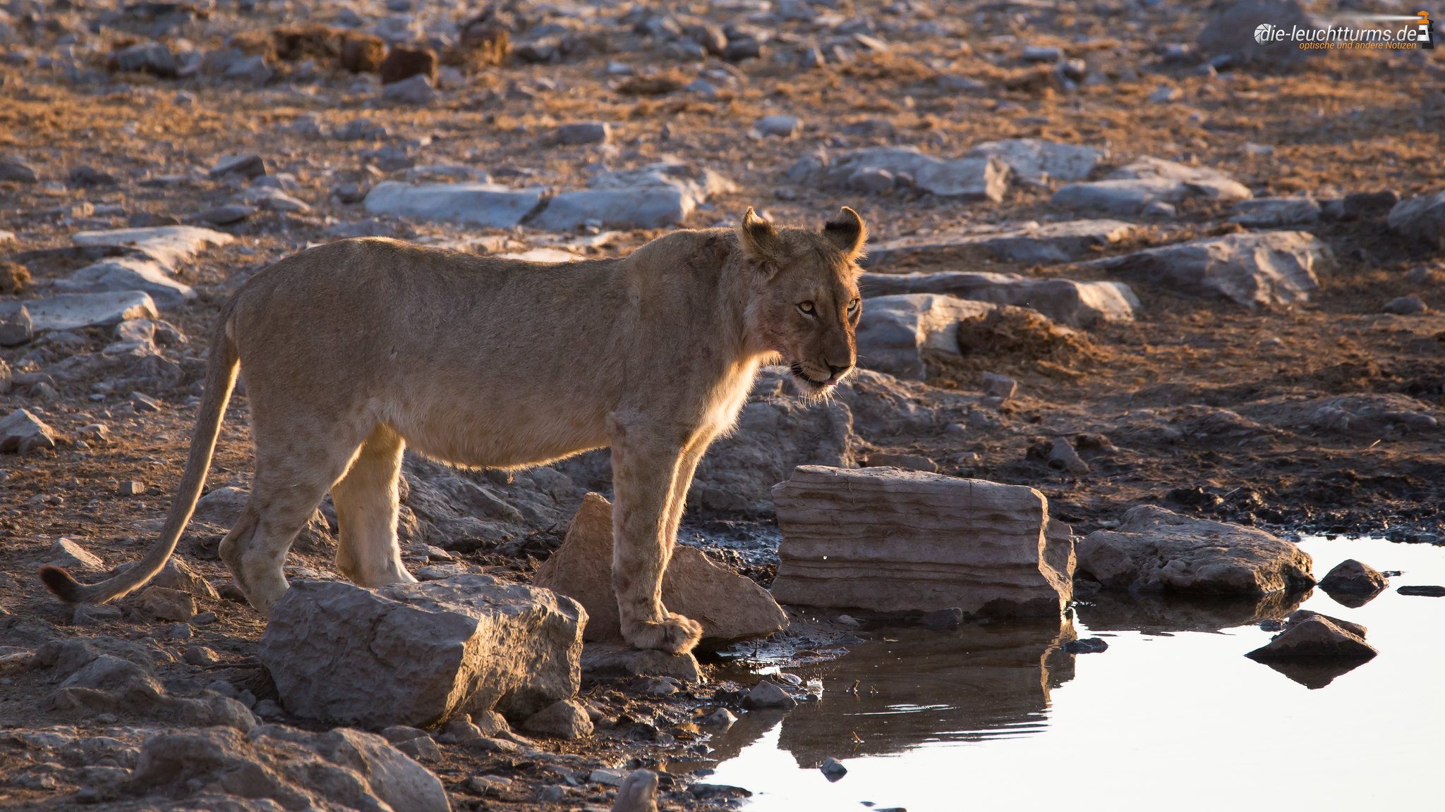 Sometime in the evening at Moringa Waterhole