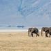 African elephants by Arun Sundar