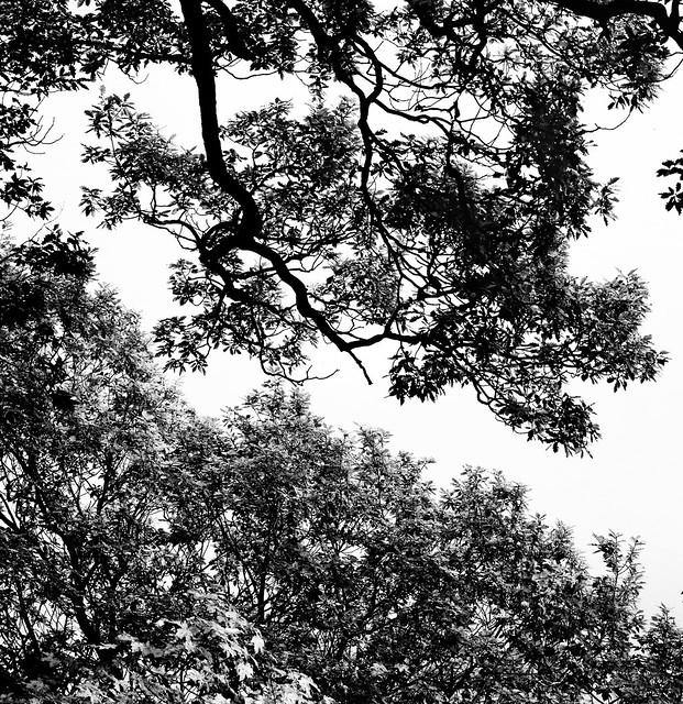 Ladybower Oaks Silhouette 5x4