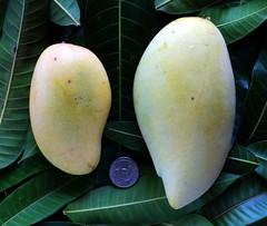 Mango  #376: CHOK ANON  & NAM DOC MAI