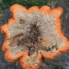 A #treestump showing the #rot at its core.