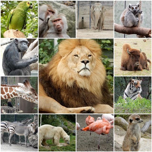 Munich zoo