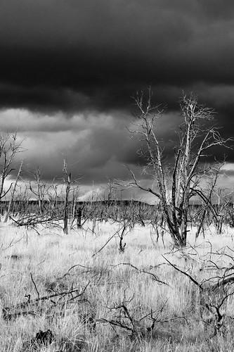 trees sky weather clouds outdoors nationalpark colorado mesaverde dramaticsky firedamage southwestcolorado mesaverdenationalpark burnttrees chapinmesa
