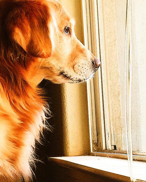 Doggy TV